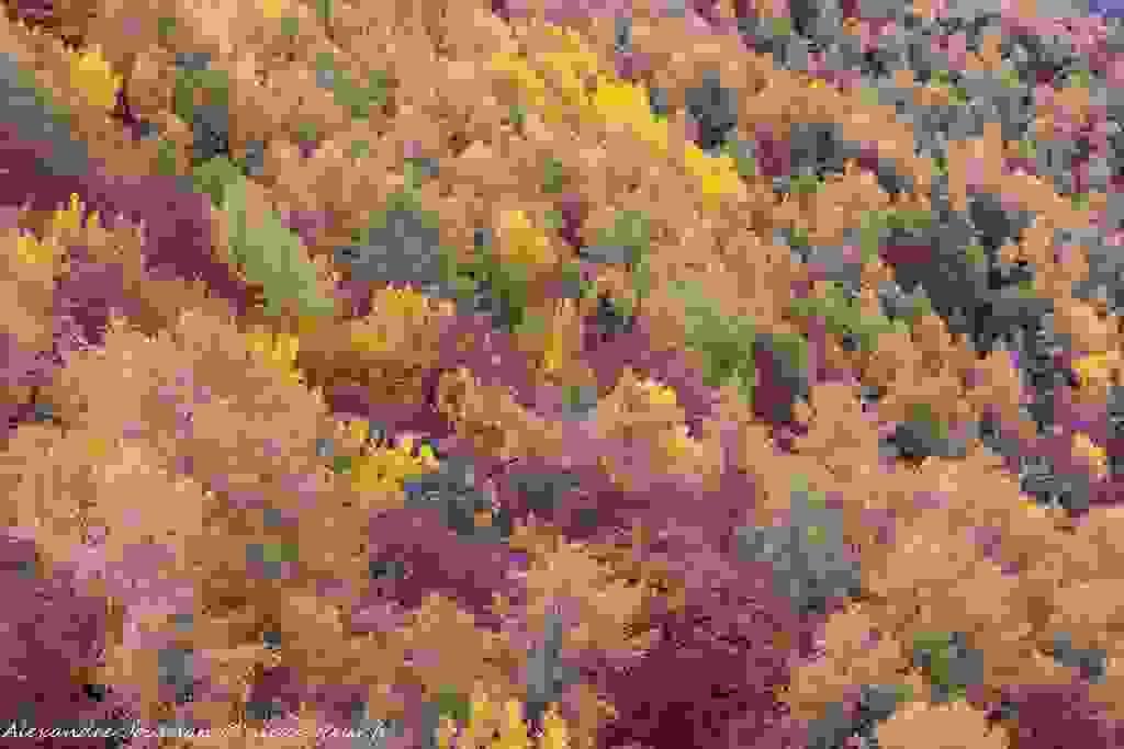 Palette de couleurs en forêt