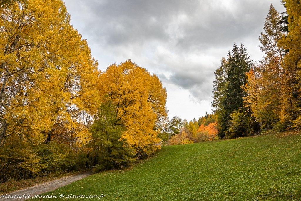 Les arbres d'or